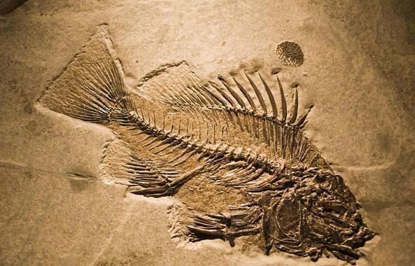 наука изучающая отпечатки и окаменелости вымерших организмов