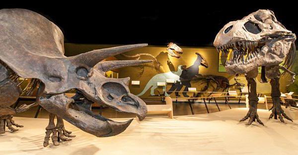 палеонтология это наука изучающая