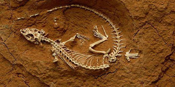 какая наука изучает ископаемые остатки вымерших организмов