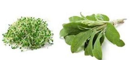 sage with menopause and hot flashes how to take