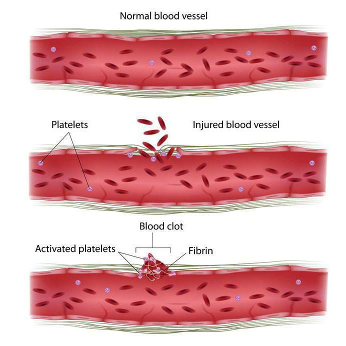 Средний объем тромбоцитов норма