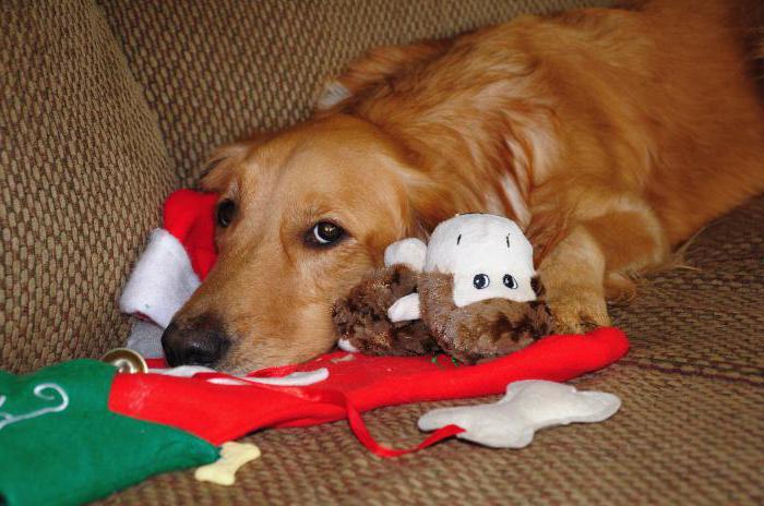Превикокс для собак лучшее лекарство для суставов с инструкцией