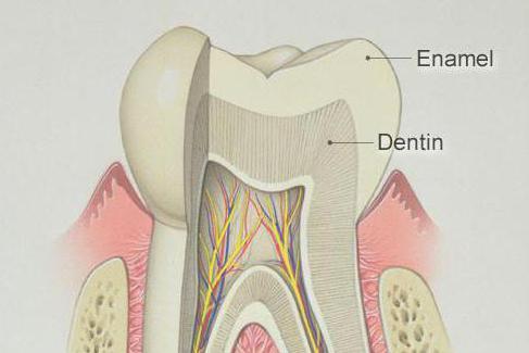вещество укрепляющее эмаль зубов