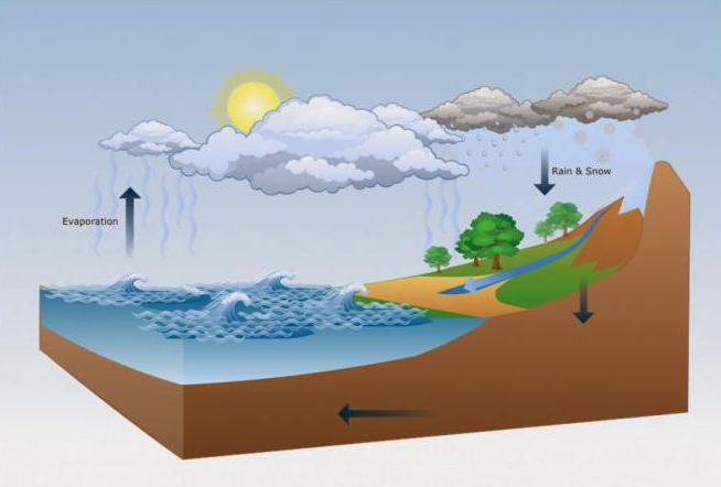 How does rain form?