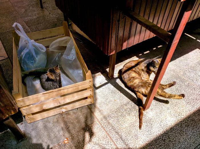 Кошке сделали стерилизацию как за ней