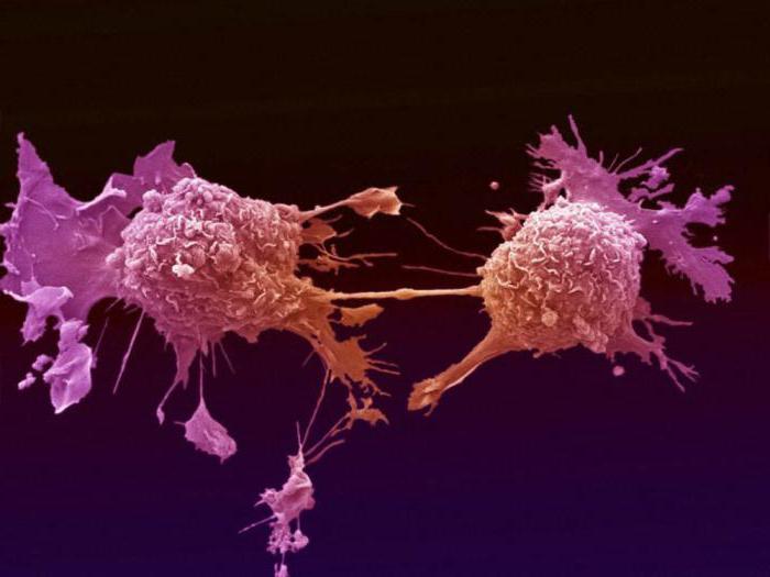 Передается ли рак через кровь