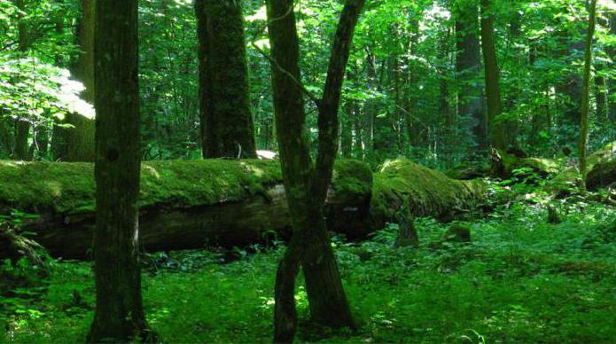 Belarus Bialowieza Forest National Park