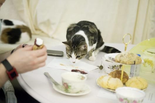 эконом-класса кот лазиет по столом что делать тех