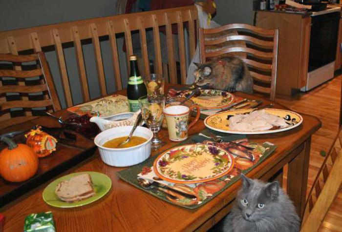 how to wean the cat to climb the tables with the help of current