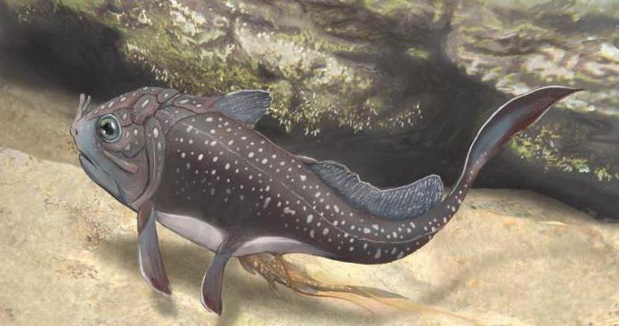 Devonian fish period