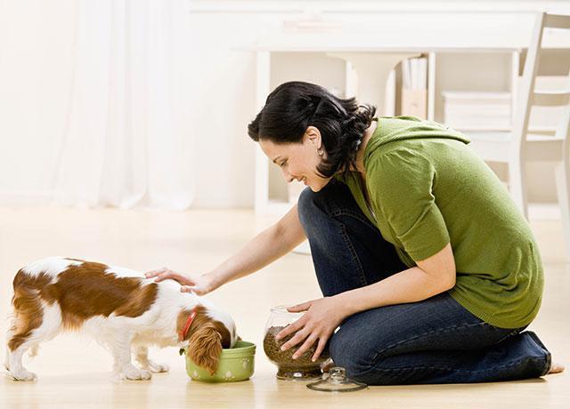 Корма для собак монже отзывы