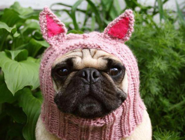 шапка для собаки своими руками