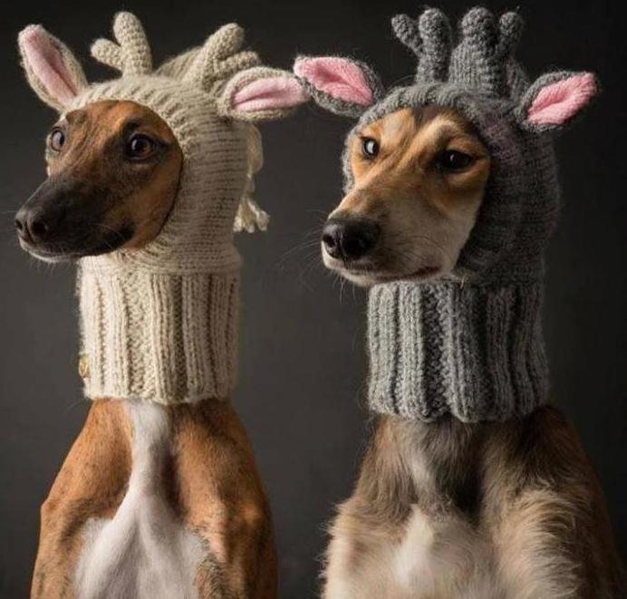 шапка для собаки спицами