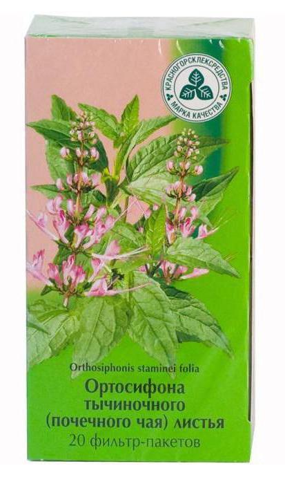 Ортосифона тычиночная почечный чай