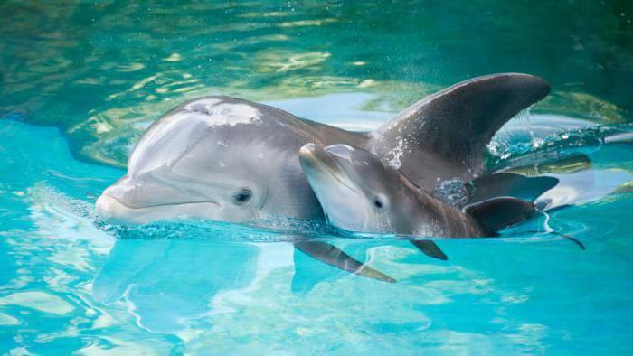 сколько лет живут дельфины на воле