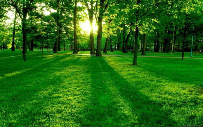 Фотосинтез: световая фаза
