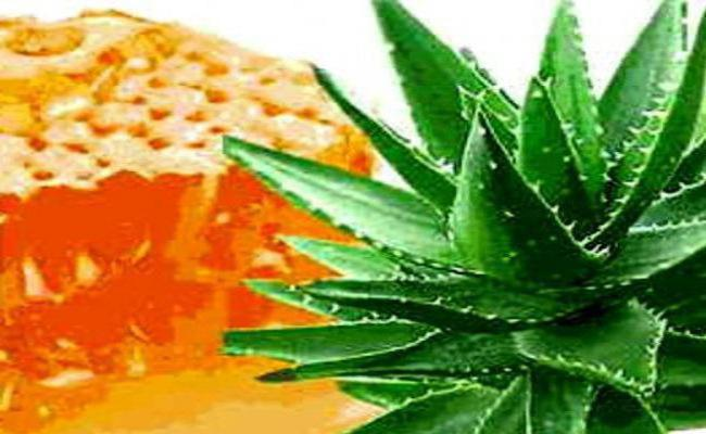 Aloe honey Cahors healing properties and contraindications