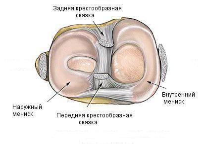 Изображение - Коленный сустав строение и функции 1625105