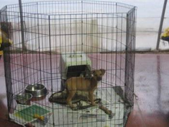 cages for dogs in the apartment