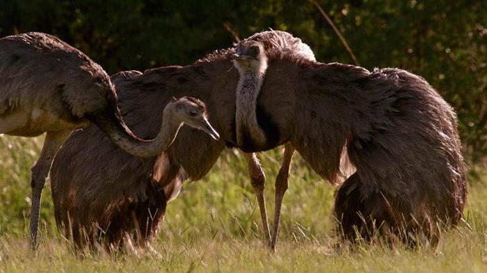 как спариваются и размножаются птицы