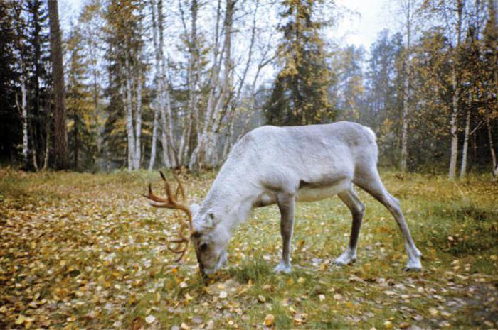 Lapland State Natural Biosphere Reserve
