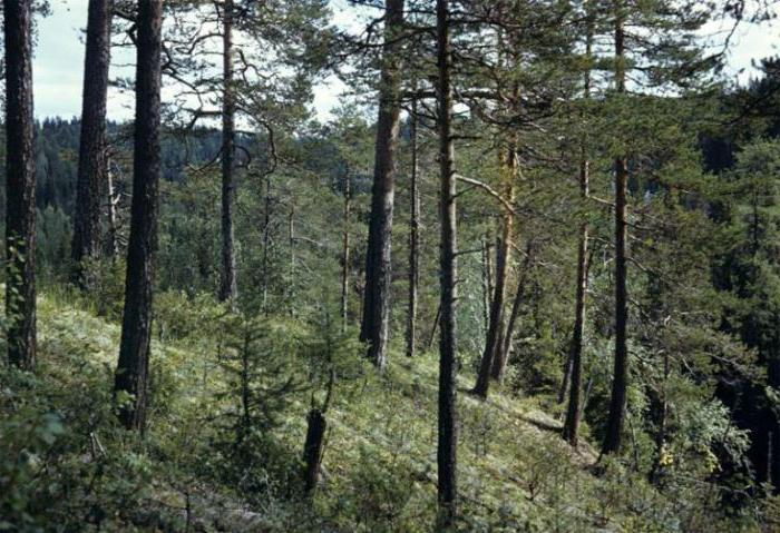 Lapland State Forest