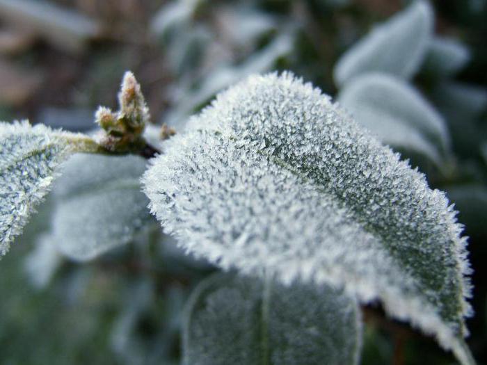 frost it