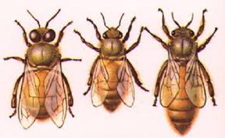 hive drone