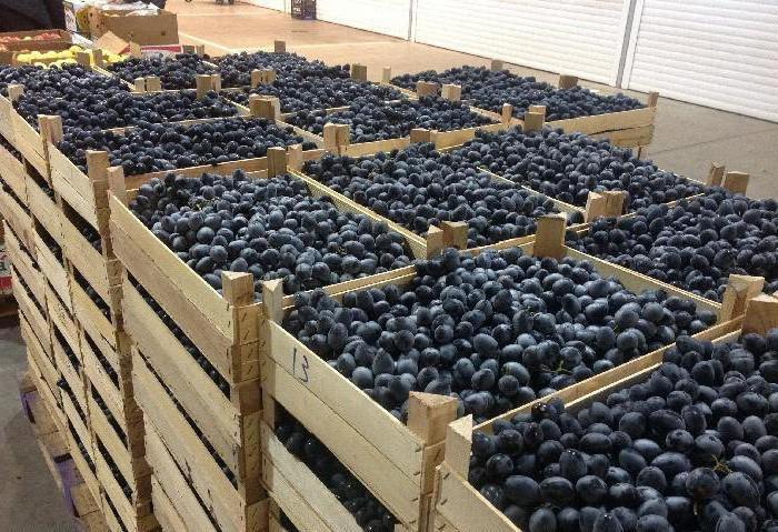 молдова виноград описание