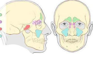 нос придаточные пазухи носа