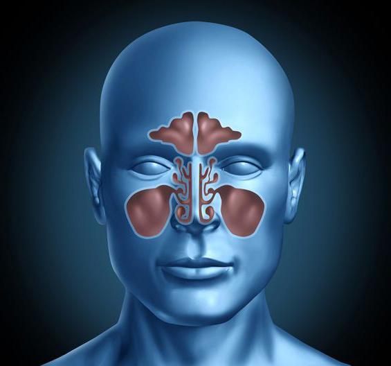 томография придаточных пазух носа