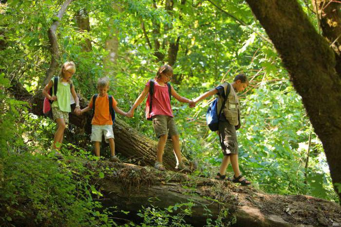 riddles about the forest for children