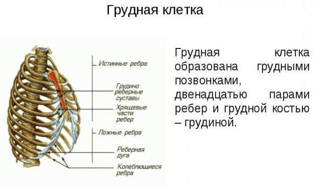 first thoracic vertebra