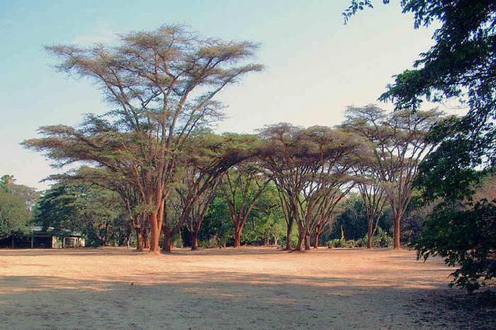 nature of Zimbabwe