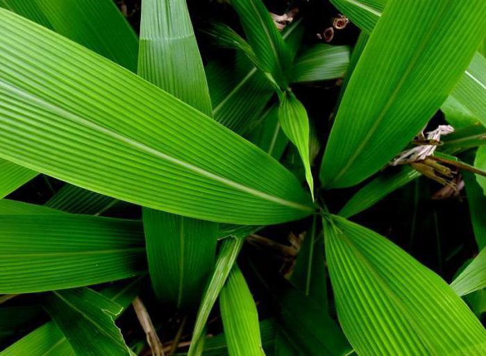 картинки параллельных листьев воспитатели советуют