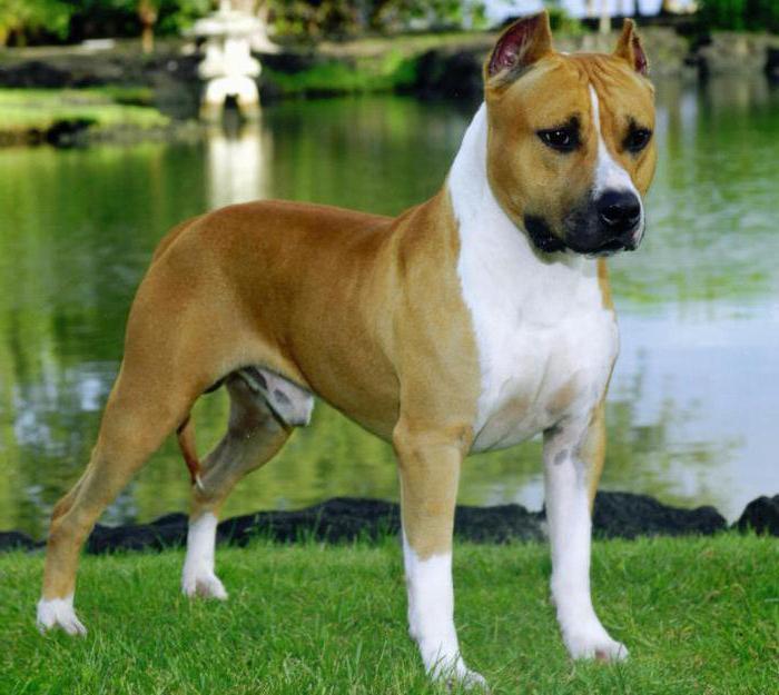 Фото собак с породой название
