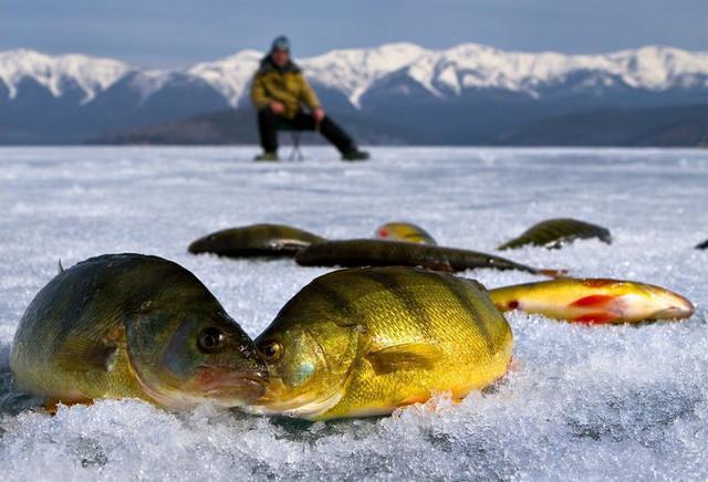 Pechenegy Kharkiv region fishing