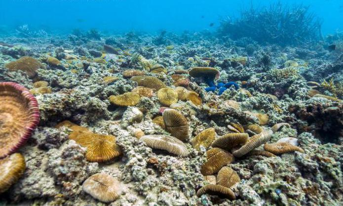 Organic World Pacific briefly