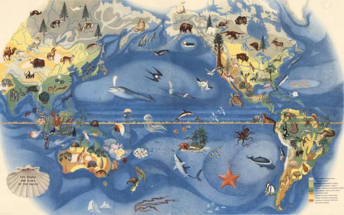 Pacific Ocean, organic world