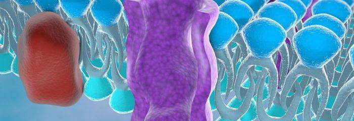 аденомиоз и эндометриоз в чем разница лечение