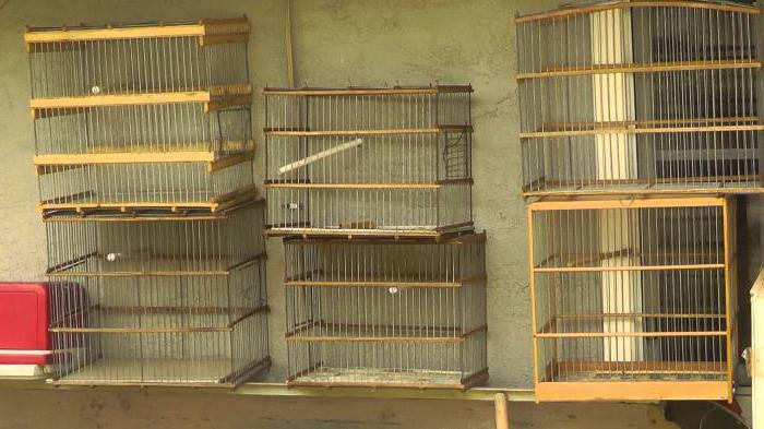 canary cages do it yourself