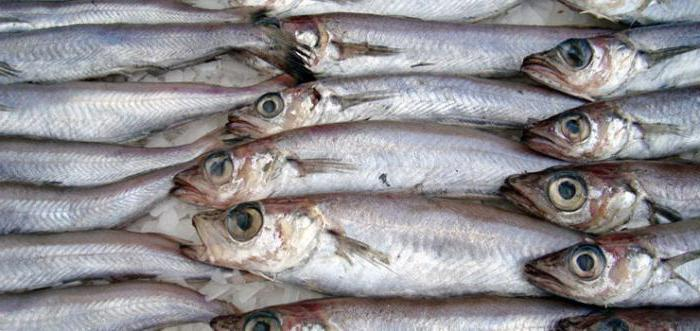 blue whiting benefit and harm