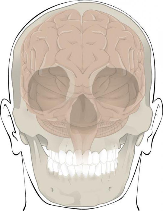 соединения костей черепа