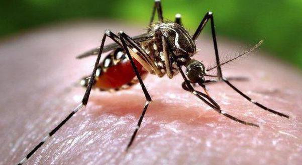 Как передаются инфекционные заболевания 4