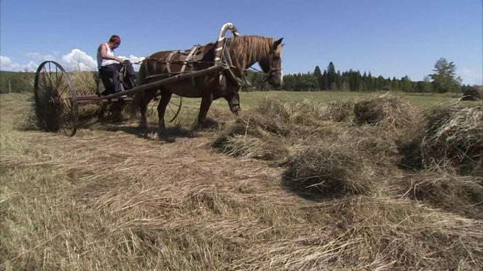 animal husbandry is a branch of agriculture