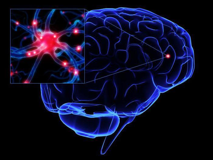 Импульсы нейронов