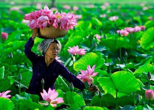 страны реки меконг