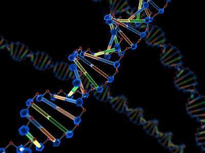 what is a nucleic acid monomer