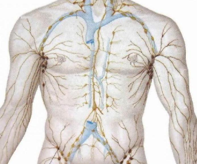 How is the tissue fluid and lymph formed briefly