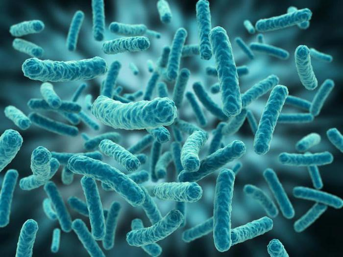 Bacterial cell structure  Wikipedia